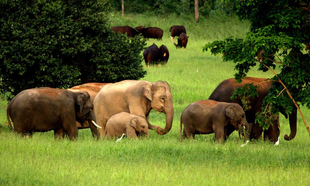 معرفی پارک های تایلند