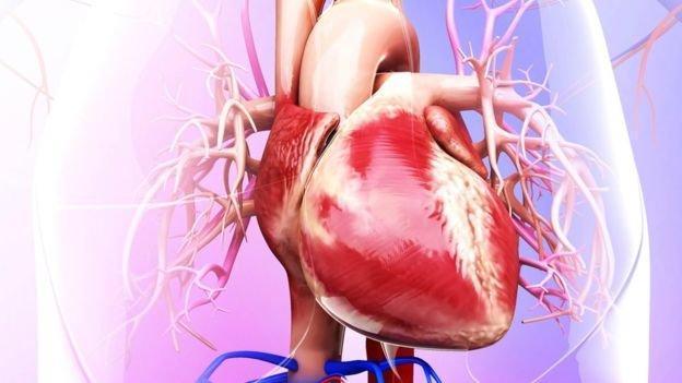 نکات کلیدی برای حفظ سلامت قلب در بیماران دیالیزی