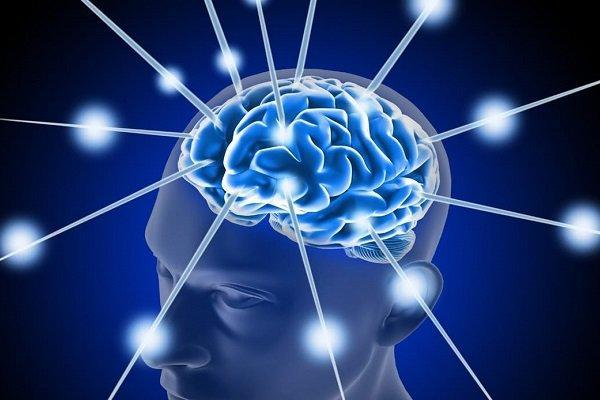 دیدگاه های جدید در خصوص فرایند فراوری نورون های یک مغز بالغ