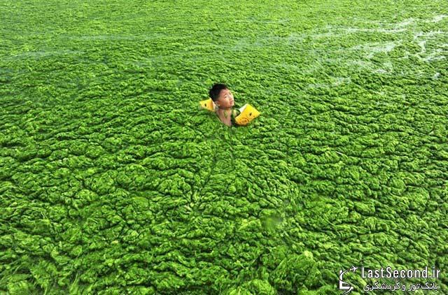 شنا در میان جلبک ها