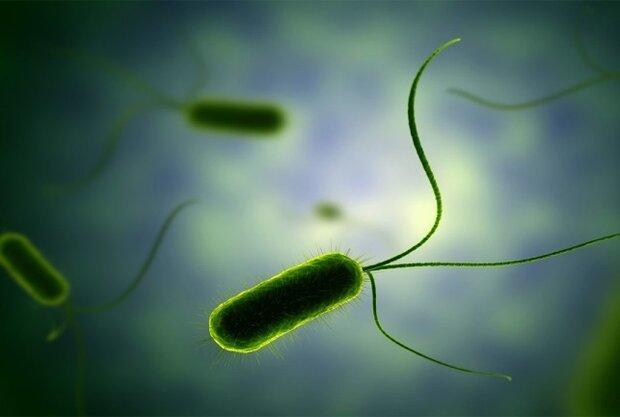 فراوری محصولی برای از بین بردن باکتری های مقاوم به آنتی بیوتیک
