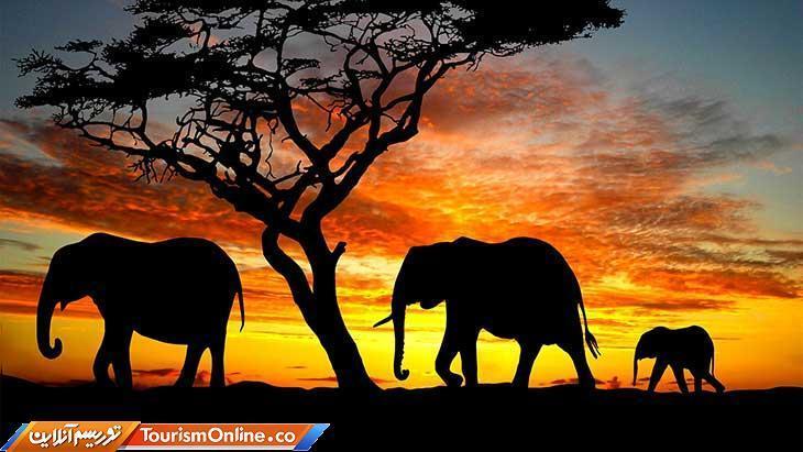 ساحل عاج کشور فیل ها!، تصاویر