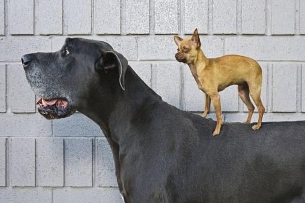 آنالیز ژنتیکی نشان می دهد سگ قدیمی ترین همراه انسان است