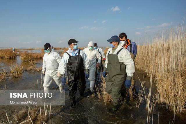 جمع آوری 1100 لاشه پرنده مبتلا به آنفلوآنزا از میقان، تزریق اعتبار برای مدیریت بیماری