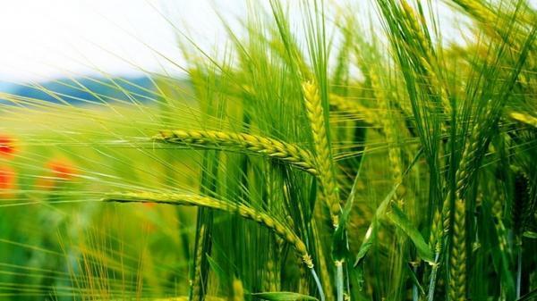 معرفی 27 رقم زراعی تازه در جهت فراوری پایدار کشاورزی در اردبیل