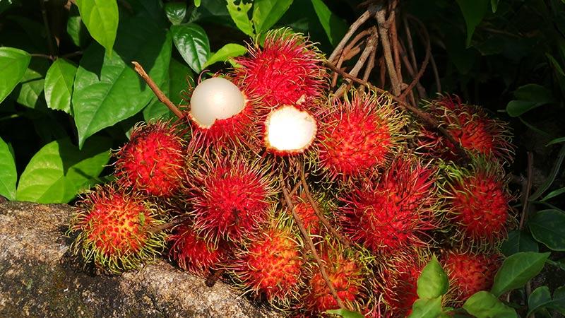 میوه های تایلندی