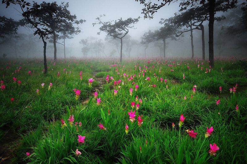 معروف ترین پارک ملی تایلند