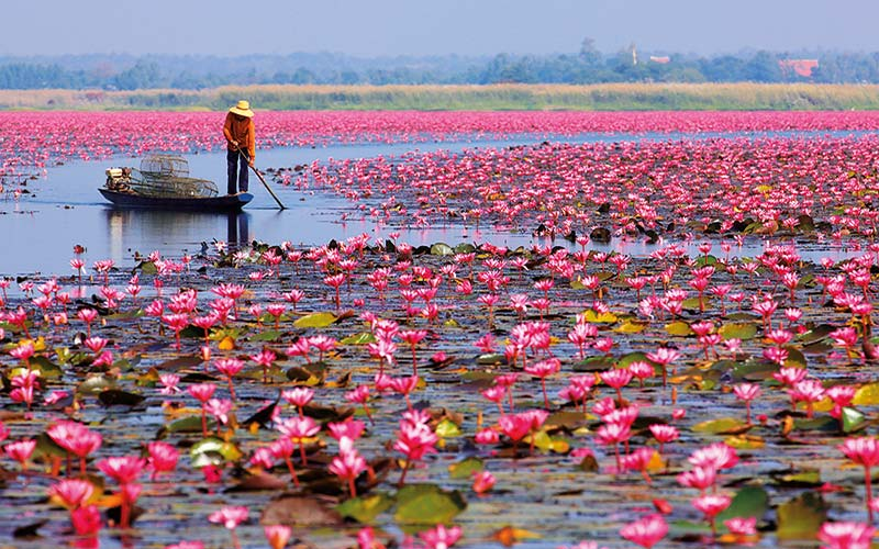دریاچه نیلوفر قرمز در تور تایلند
